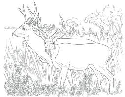 Whitetail Deer Coloring Pages Online Baby Free Hunting With Pictures To Print