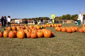 Pumpkin Festival Cleveland Ohio by America U0027s Best Pumpkin Festivals U2013 Fodors Travel Guide