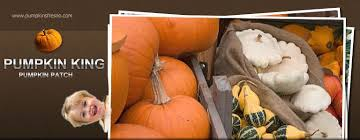 Pumpkin Patch San Jose 2015 by Find Pumpkin Patches In California Pick Your Own Pumpkins