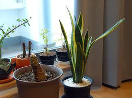 Pot Plants For The Bathroom by 10 Best Houseplants For Improving The Air Quality In Your Home