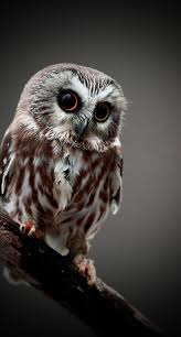 2537 Best Owl Spirit Power Animals Images On Pinterest | Beautiful ... 3716 Best All About Owls Images On Pinterest Barn Owls Nature Winter Birding Guide Lake Champlain Region 53 Flight At Night Owl Species Farm House England Stock Photos Images 1538 Owls Photos Beautiful Birds 2552 Give A Hoot Children Large White Carraig Donn Mayo Sghilliard Glass Studio Little Opens In Westport Food Drink Nnecticutmagcom 250 Love You Always