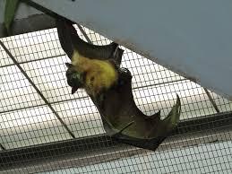 Cincinnati Zoo Halloween by Bats Lee U0027s Birdwatching Adventures Plus