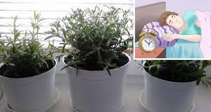 dormir avec une plante dans la chambre voici 5 plantes pour votre chambre à coucher qui vous aideront à