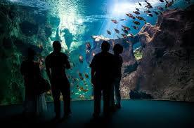 la rochelle aquarium picture of aquarium la rochelle la