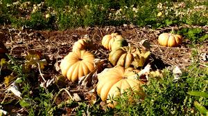 Pumpkin Patch Yucaipa Hours by Glen Pumpkin Patch Hours Portland