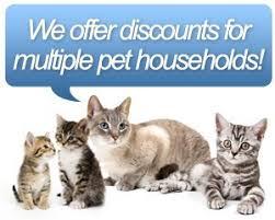 mobile cat grooming cat grooming ta fl barker s mobile pet grooming