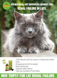 renal failure in cats 76 best kidney disease in pets images on alternative