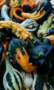 Sarasota Pumpkin Festival by Fruitville Grove Store U2013 Fruitville Grove Store