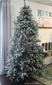 Which Christmas Tree Smells The Best Uk by Fraser Fir Chart Telling Which Trees Last Longest Smell Best