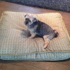 Kirkland Dog Beds by Costco Kirkland Dog Bed Bedroom Home Decorating Ideas Kdr6qoglxw