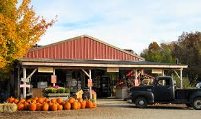 Pumpkin Patch In Yucaipa by Best Apple Picking Places Near Me Fall Apple Orchard Events