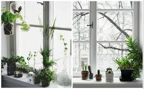 plante verte dans une chambre à coucher plante verte pour chambre a coucher 60 images lе vase en verre