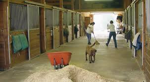 Budget Barn Cleaning Kit - Expert Advice On Horse Care And Horse ... New Custom Barn Style Cedar Dog House Ac Heated Insulated Boarding Photolog Amazoncom Prevue 465 Red Chicken Coop Garden Outdoor The Vaccines Barn Dogs Need Horse Owners Resource Diy Door Pet Condo Sheepy Hollow Farm Age Ecoflex Jumbo Fontana Echk503b Rural King Status Playtime Youtube Badrap Blog A View From The Inside Traing