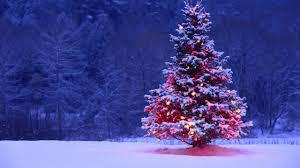Christmas Tree Disposal New York City by The Greenbox Ny Blog