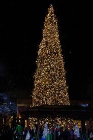 Fashion Island Tree Lighting 1