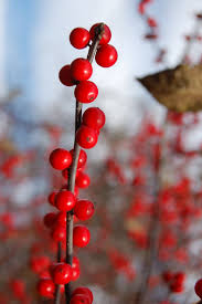 Winterberry Christmas Tree Farm by 221 Best Landscaping Ideas Images On Pinterest Landscaping