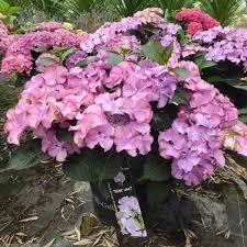 Garden Guru Sunny Side Of Life NZ Herald