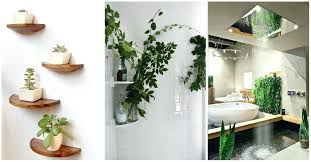 Best Plants For Bathroom Feng Shui by Bamboo Plant In Bathroom Home Design