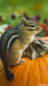 Squirrel Feeder Adirondack Chair by 3777 Best Nutty Friends Images On Pinterest Animals Chipmunks