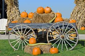 Shady Lane Farm Pumpkin Patch by Maps Curbed