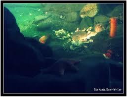 Explore Pacific Undersea Gardens The Koala Mom