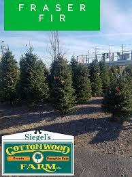 Fresh Cut Christmas Trees At Menards by Christmas Trees Siegel U0027s Cottonwood Farm