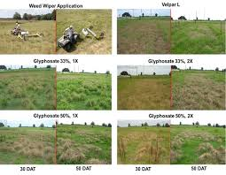 Journal Of The NACAA Herbicide Evaluation For Smutgrass Control