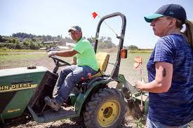 Snohomish County Pumpkin Patches Corn Mazes by How Carleton Farms Prepares For Halloween U2014 In The Summer