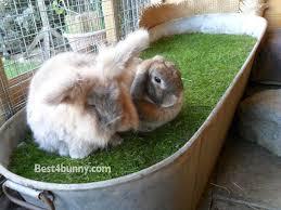 rabbit accommodation housing ideas for bunny rabbits best 4 bunny