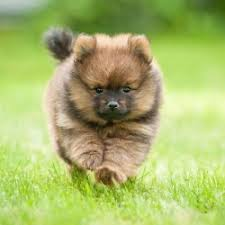 Quiet Small Non Shedding Dog Breeds by Cute Small Quiet Dog Breeds Breed Dogs Picture