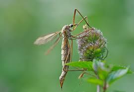 mücken vertreiben so werden sie die plagegeister los das haus