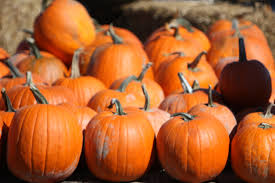 Powell River Pumpkin Patch by Things To Do In Columbus This Weekend Oct 6th Oct 8th 2017