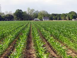 Best Pumpkin Patch In Fayetteville Nc by 10 Must See Alabama Fall Festivals U0026 Corn Mazes
