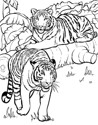 Adult Animal Tigers Animals African Savannah Coloring Pages