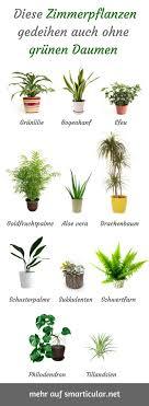 pflegeleichte zimmerpflanzen für menschen ohne grünen daumen