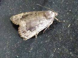 fancy how to to rid of moths in your closet