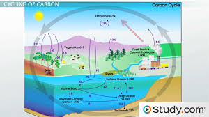 Define The Word Carbon Sink by Cycles Of Matter The Nitrogen Cycle And The Carbon Cycle Video