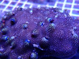 Krinner Christmas Tree Stand Home Depot by Christmas Tree Rock Coral Part 35 Coral Christmas Tree Worm