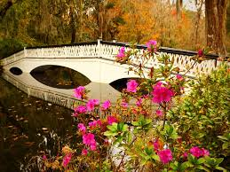 Other Lake Stream Magnolia Garden Water Forest Nature Nice