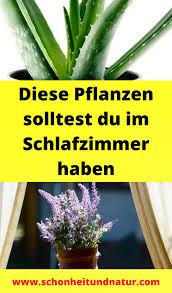 diese pflanzen solltest du im schlafzimmer haben in 2021