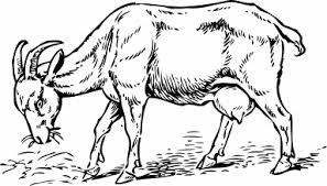 Free Goat Coloring Pages Clipart