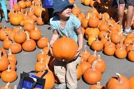 Pick Of The Patch Pumpkins Santa Clara by Alviso Day On The Bay Draws More Than 10 000 U2013 The Mercury News