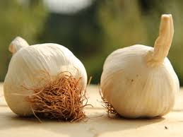 solent wight seed garlic grow your own