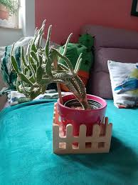 kaktus pflanze grün wohnzimmer