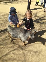 Woodside Pumpkin Festival by Silicon Valley Toddler And Beyond Everywhere A