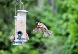 6 Tips For Your Backyard Bird Feeder - Heritage Farm & Garden-Long ... Some Ways To Keep Our Backyard Birds Healthy Birds In The These Upcycled Diy Bird Feeders Are Perfect Addition Your Two American Goldfinches Perch On A Bird Feeder Eating Top 10 Backyard Feeding Mistakes Feeder Young Blue Jay First Time Youtube With Stock Photo Image 15090788 Birdfeeding 101 Lover 6 Tips For Heritage Farm Gardenlong Food Haing From A Tree Gallery13 At Chickadee Gardens Visitors North Andover Ma