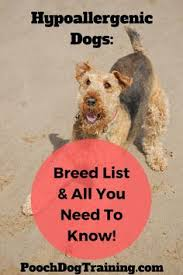Low Shedding Dogs List by 16 Low Shedding Breeds Columbia Dog And Animal