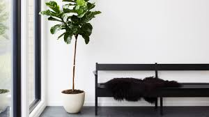 100 Tree Branch Bookshelves 8 Best Indoor Plants How To Take Care Of Them