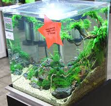 zoetwater nano aquarium the of planted aquarium dennerle