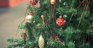 Becks Christmas Tree Farm by The Decline Of Pine Plastic Trees Reign This Christmas